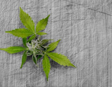 How To Layer Your Cannabis Medicine