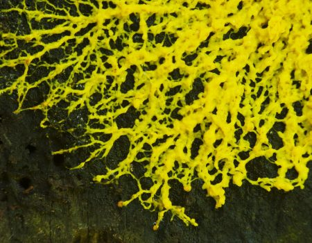 How to Rid Your Lawn of Slime Mold: Personal Experience