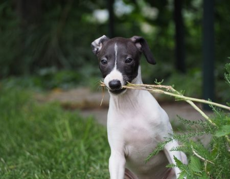 Tactics That'll Stop Your Puppy From Ripping Off Their Training Pads