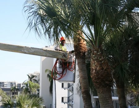 Palm Tree Removal – Things You Should Keep In Mind