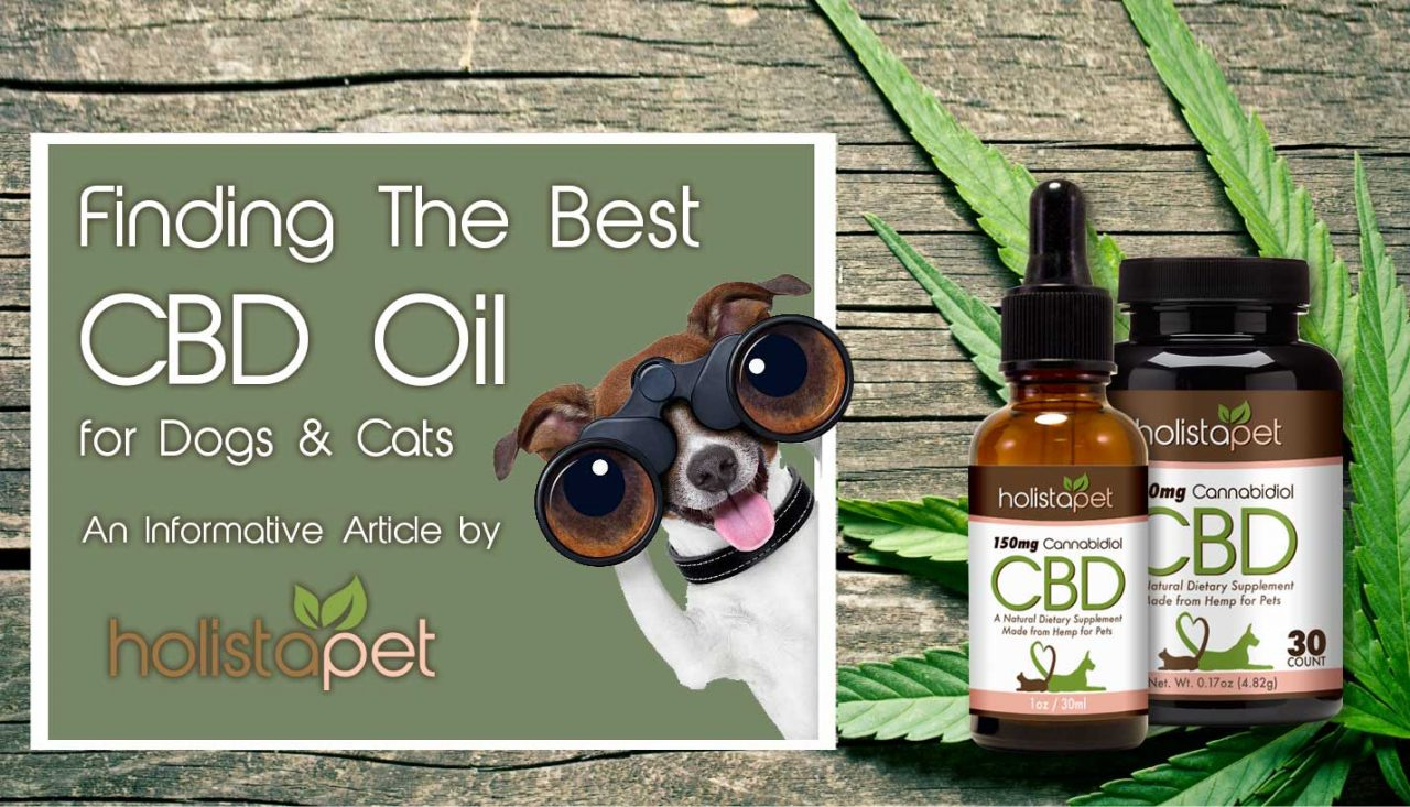 Buy CBD Treats For Your Dog And Look At The Benefits Of This Fun Snack