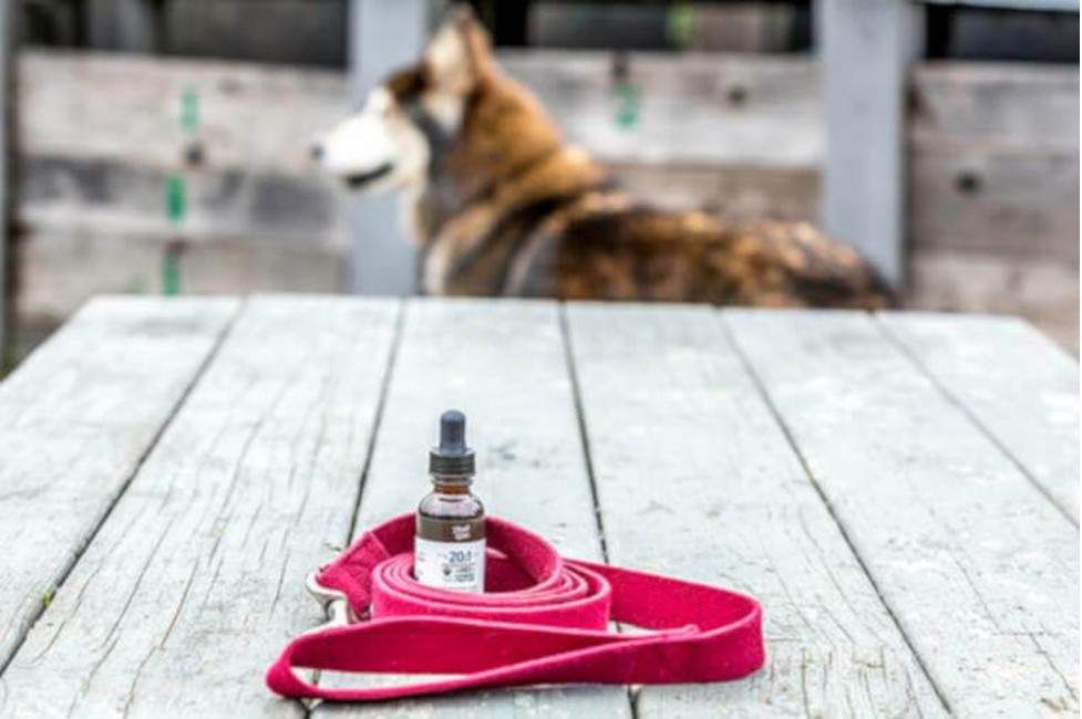 Here Are Potential Benefits Of CBD For Dogs