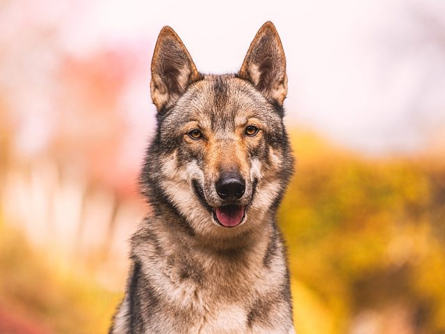 Factors To Be Considered Before Setting Up The Pet Store
